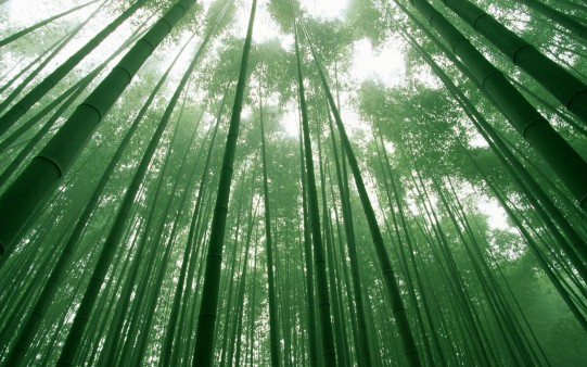 Despite the hardness, the most difficult times, despite the penalties                               that life brings… we can learn to flourish flexible as bamboo